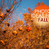 10 Photo Ideas for Fall