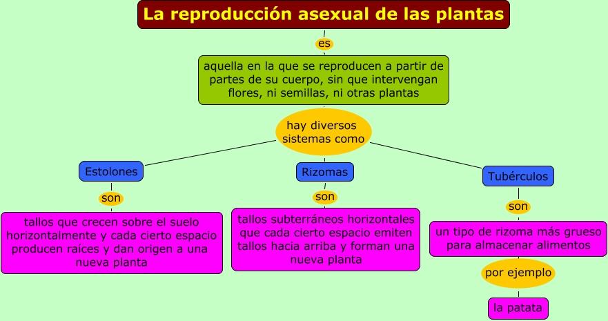 El sitio donde aprendemos La reproducción asexual de las plantas