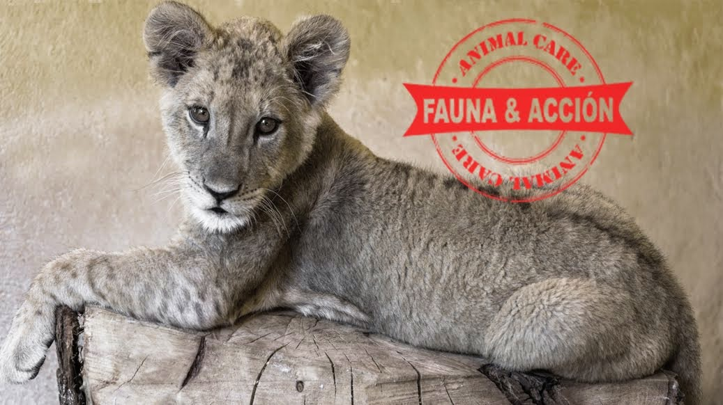 Fauna y Acción - Animal Care