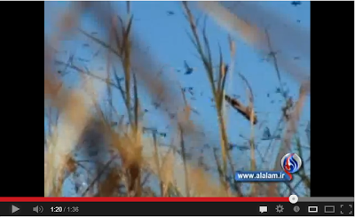 Video Belalang Juta Serang Israel