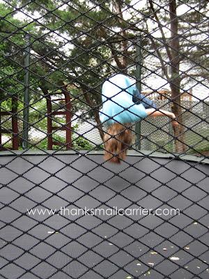 trampoline flips