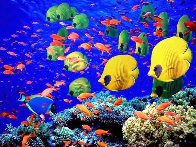 أجمل الأسماك الاستوائية الملونة   - صفحة 4 Colorful-tropical-fishes-27