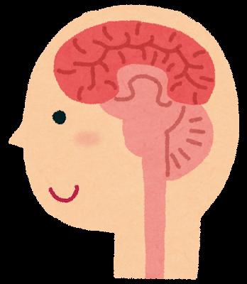 脳のイラスト(人体)