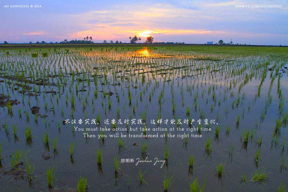 郑明析,摄理,月明洞,稻田,夕阳,实践,变化,Joshua Jung, Providence, WMD, JMS, Paddy Field, Sunset, Take action, Transform