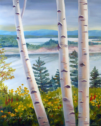 birch trees by the sea in Nova Scotia