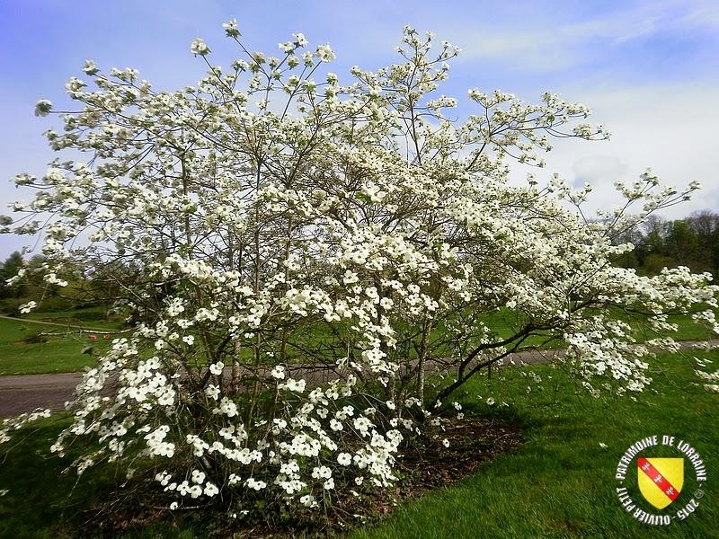 VILLERS-LES-NANCY (54) : Le jardin botanique du Montet-Cornouiller de Nutali