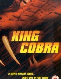 King Cobra | Bmovies
