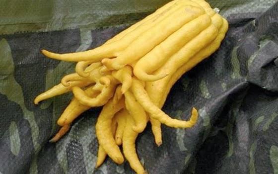10+buah+paling+aneh+di+dunia,+Tangan+Bud