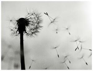 Las espigas hacen cosquillas al viento.Ramón Gómez De La Serna