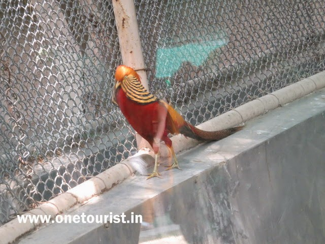 Delhi zoo , timing , route , info and photos