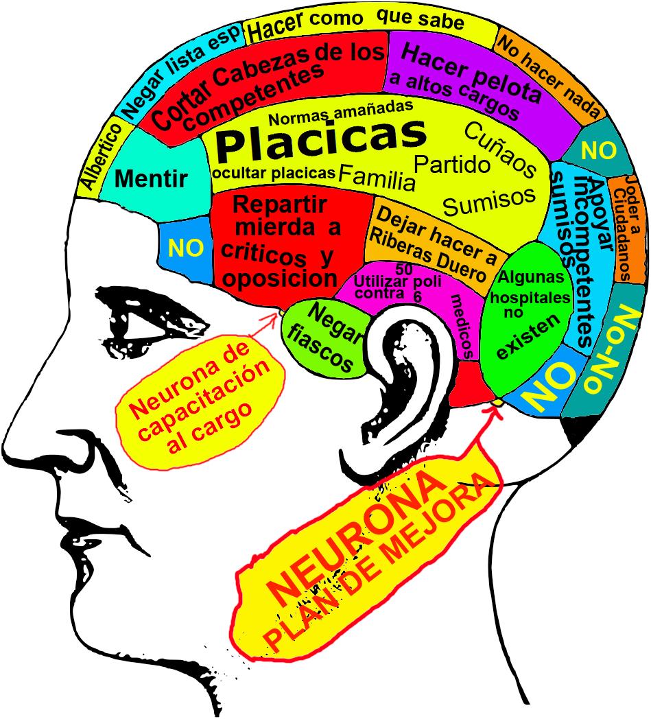 Psicofisiologia: EL CEREBRO