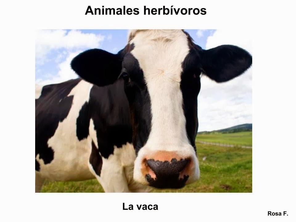 Maestra de Primaria: Animales herbívoros. Vocabulario en imágenes ...