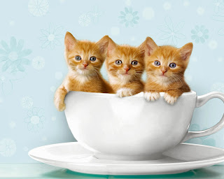 kittens in a tea cup