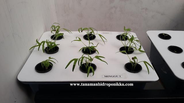 tanamanhidroponikku