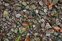 Dry leaves and river stones