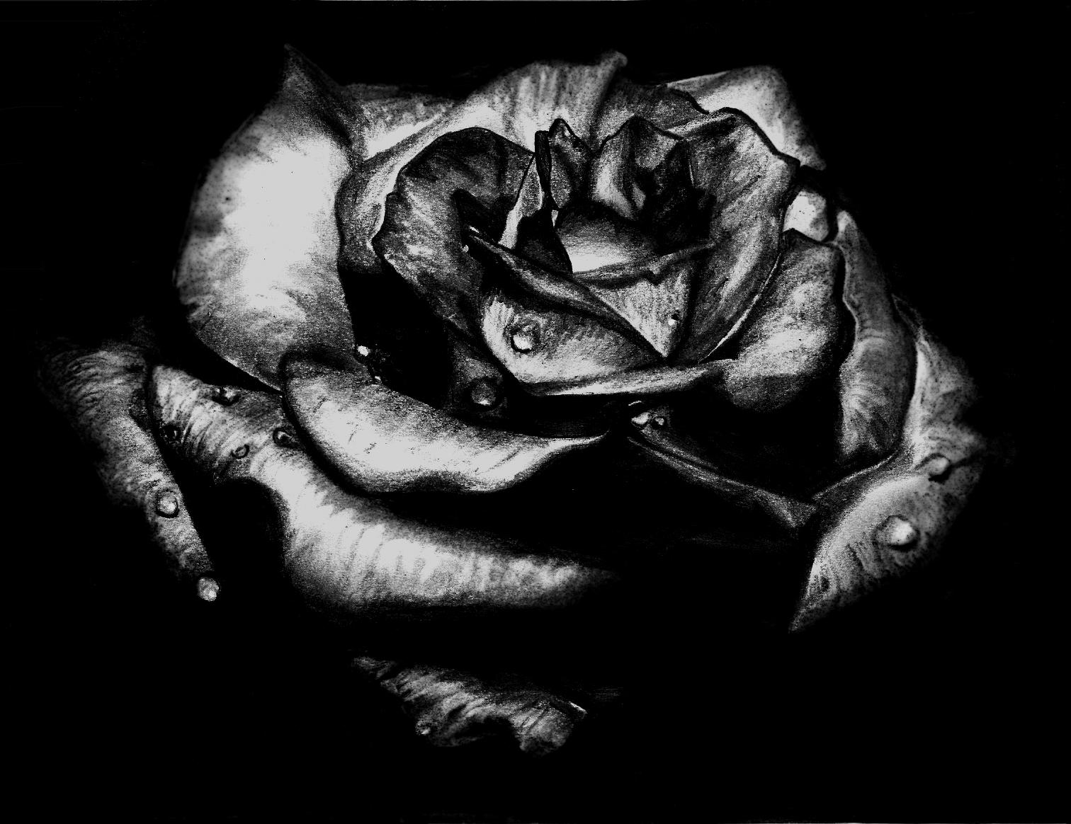 Planted Black Rose