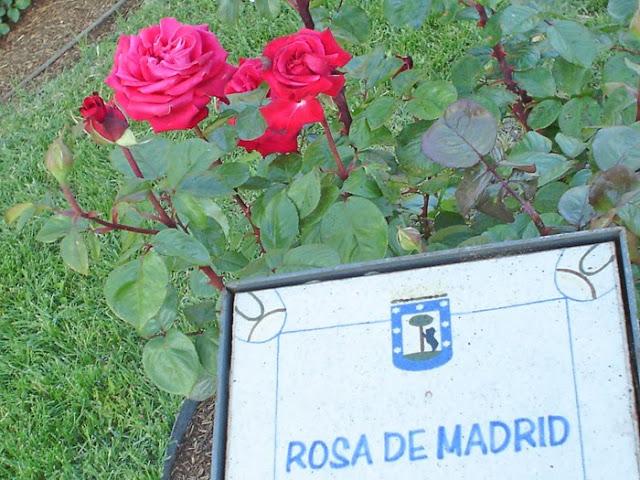 Foto concurso popular de la rosa del año 2012 Madrid.