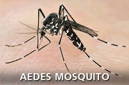 síntomas-de-dengue