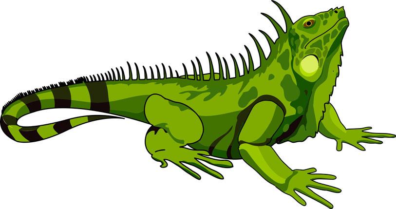 Dibujo de una iguana verde  Imagui