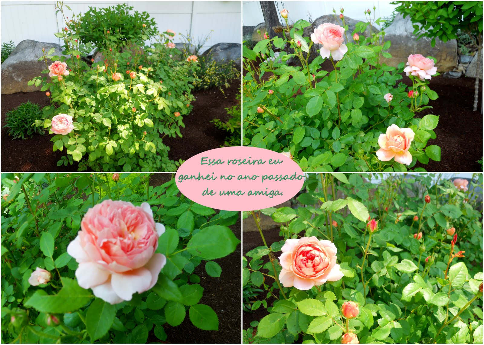 flores do meu jardim krafta:Casa de Retalhos: Flores do meu jardim