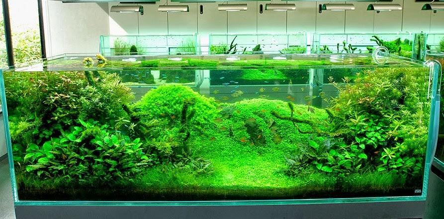 Aquarium Aquascape dunia lain dibawah air