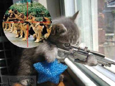Gambar kucing lucu - Ngapakers.Com