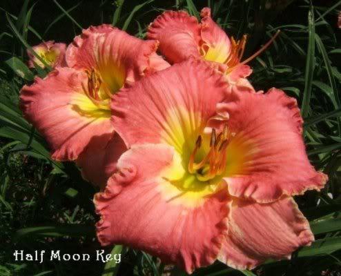 Maza Images Ambrosia Flower