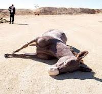 """<img src=""""keledai.jpg"""" alt=""""Akhirnya dia mati seperti keledai"""">"""