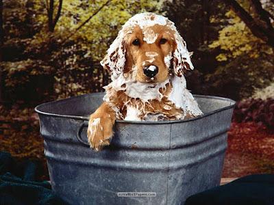 Al bañar a tu mascota