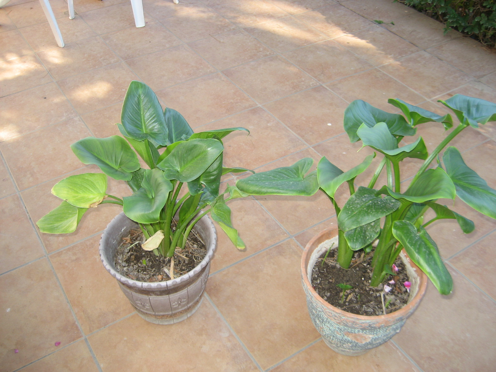 El huerto de balsas plantas de interior y exterior en macetas for Plantas de exterior para macetas
