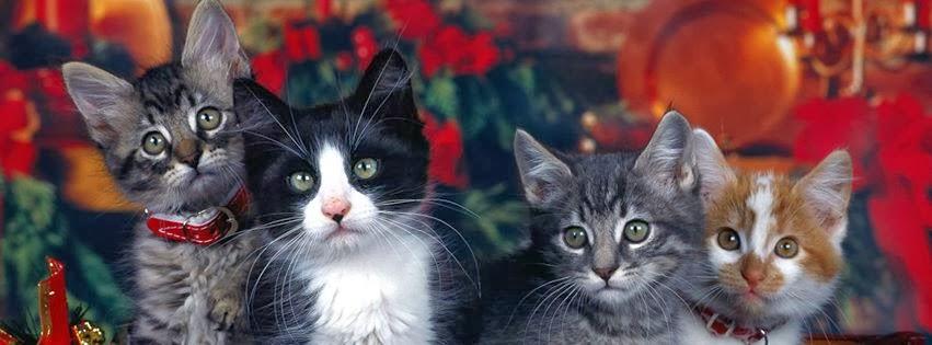 Gatos 8