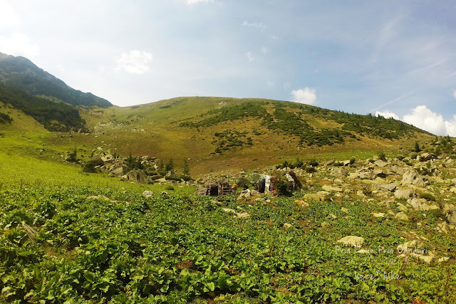 gugu-peak-hike-sheep-herder-hut