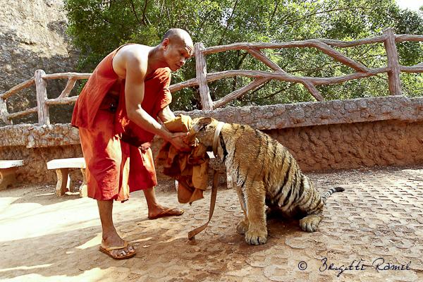 temple des tigres thailande