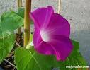 ดอกไม้ในโรงเรียนอนุบาลราชบุรี.....ที่มหัศจรรย์