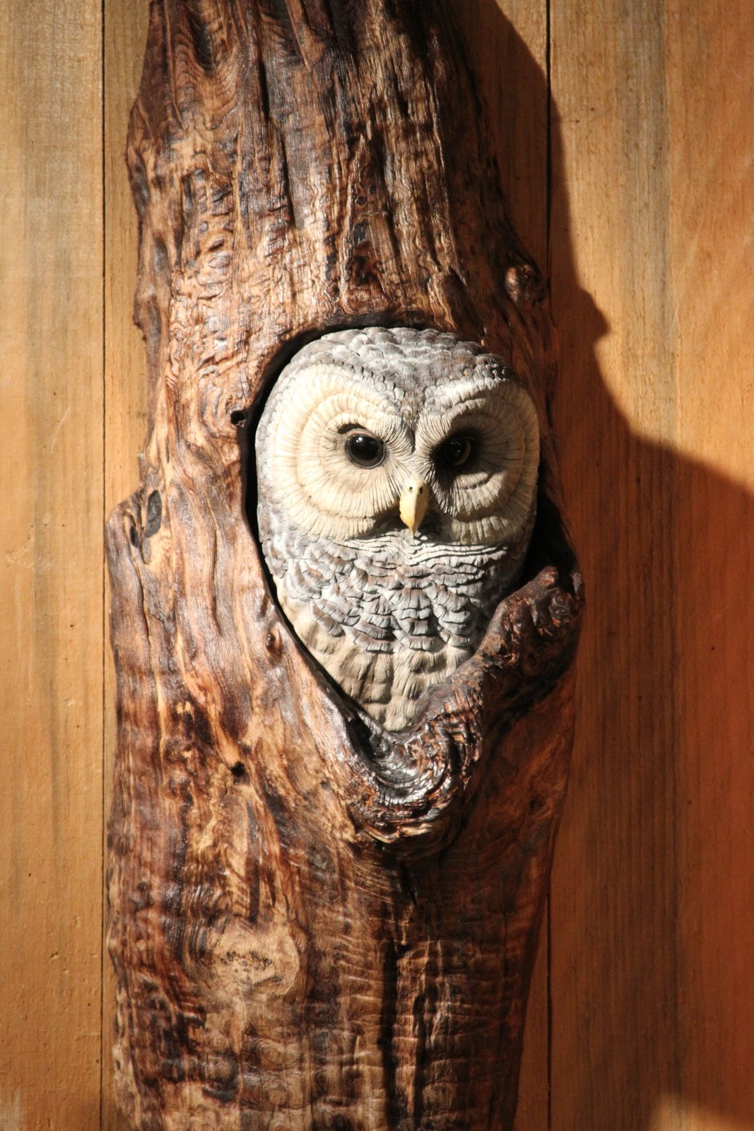Vern s birds carvings barred owl for sale