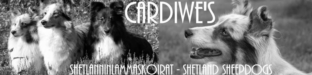 Cardiwe's sheltit
