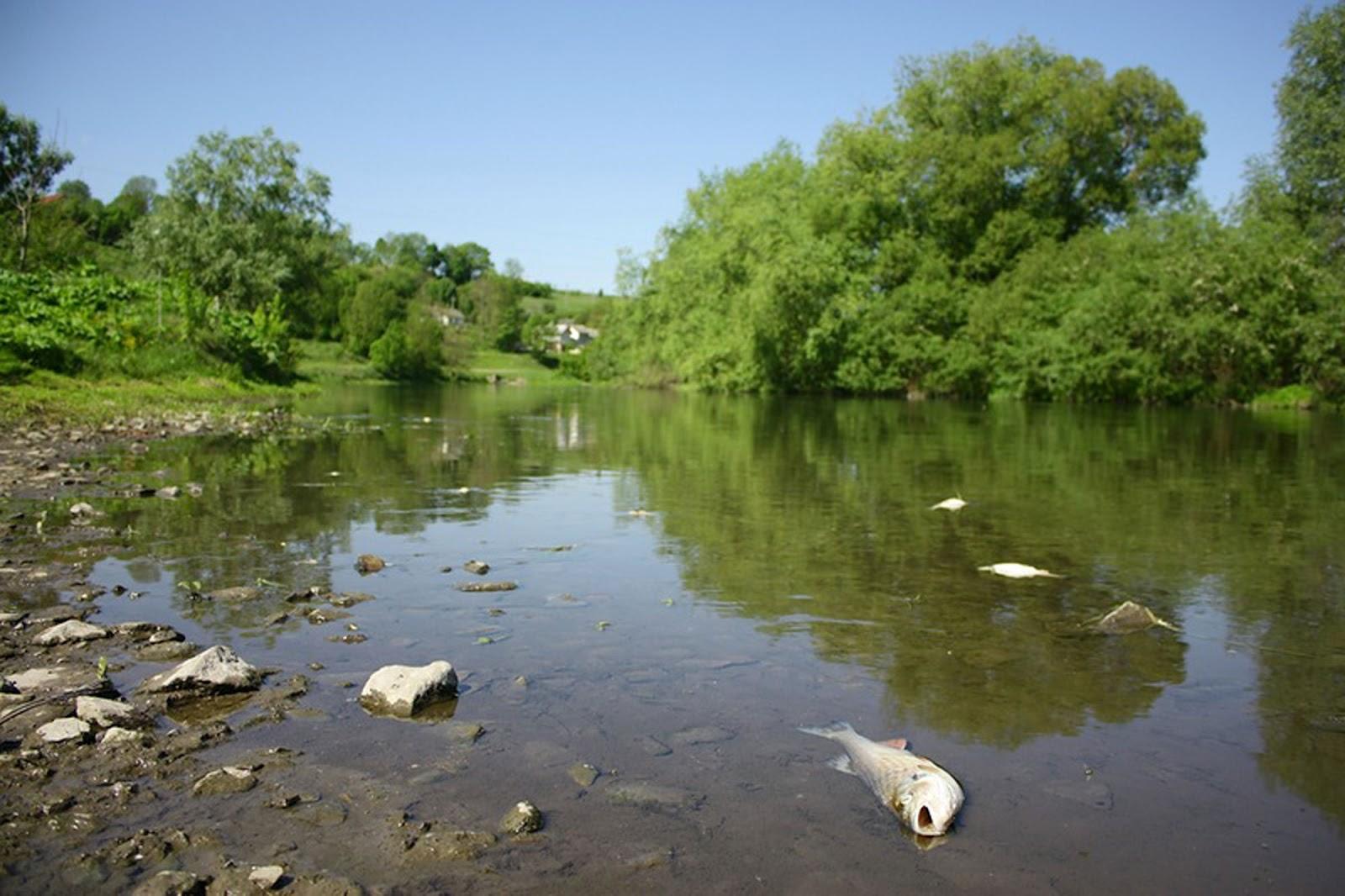 Хто живе в річкі назви і фото і маленька інформація 11 фотография