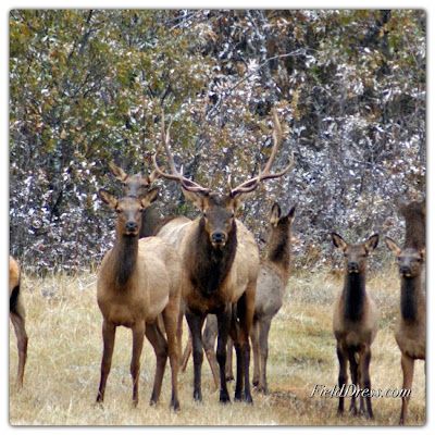Acres, elk, foundation, habitat, public, dnr,conservations, hunting, hunt, hunters