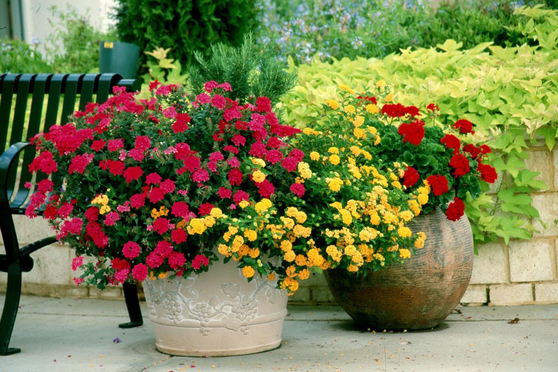 Какие цветы выращивать на даче