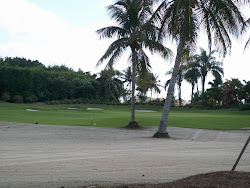 the palm course, grey oaks