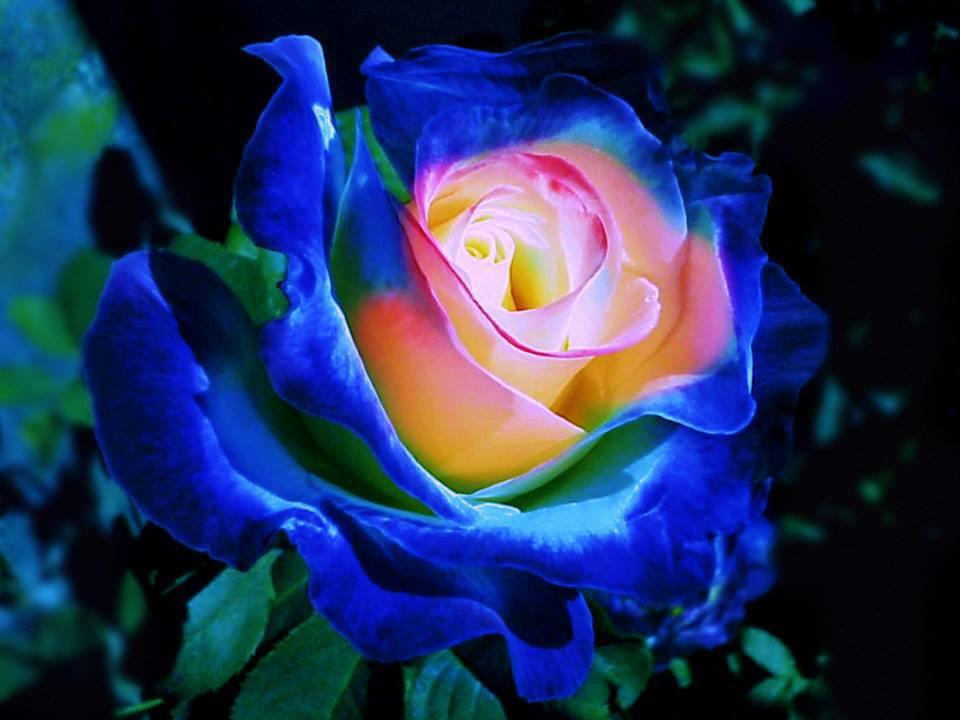 Ben tenuti nel mio blog di cucina italiana bellissima for Foto di rose bellissime