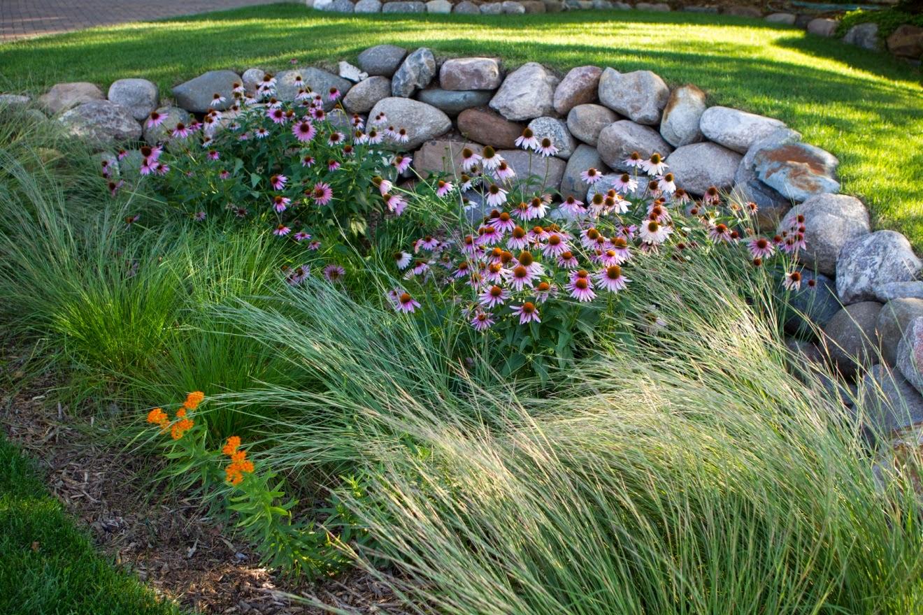 The Ripple Effect Every Rain Garden Needs a Little TLC – Rain Garden Plants