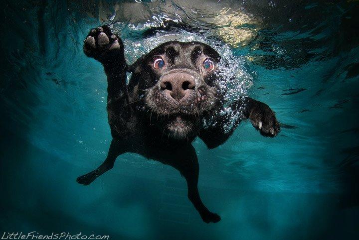 Seth Casteel underwater
