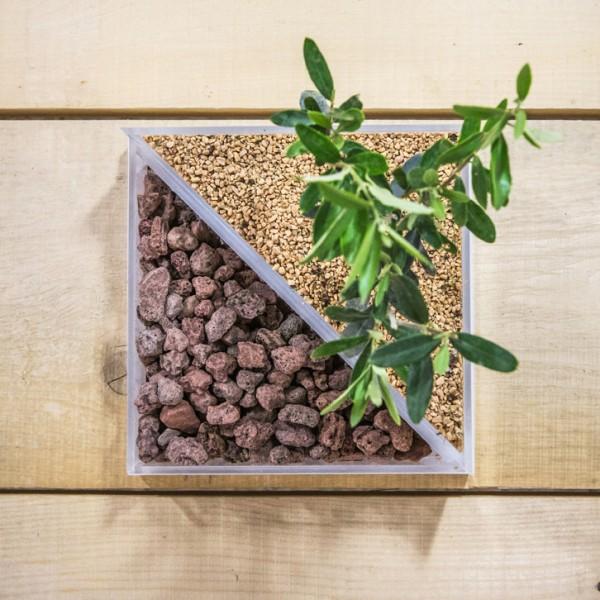 vaso in plexiglass per composizione piante verdi
