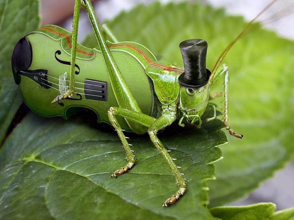 Violin-Cricket_Wallpaper_7oplf.jpg