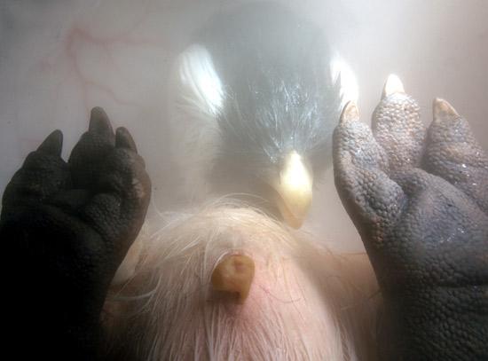 Gambar-gambar janin haiwan dalam rahim dan telur