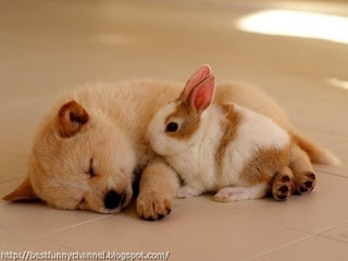 Cute bunny and puppy.