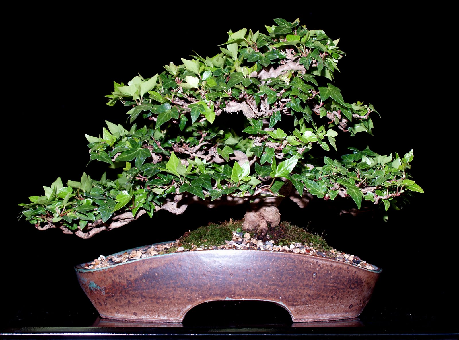 Let39s Learn Japanese The Art Of Bonsai