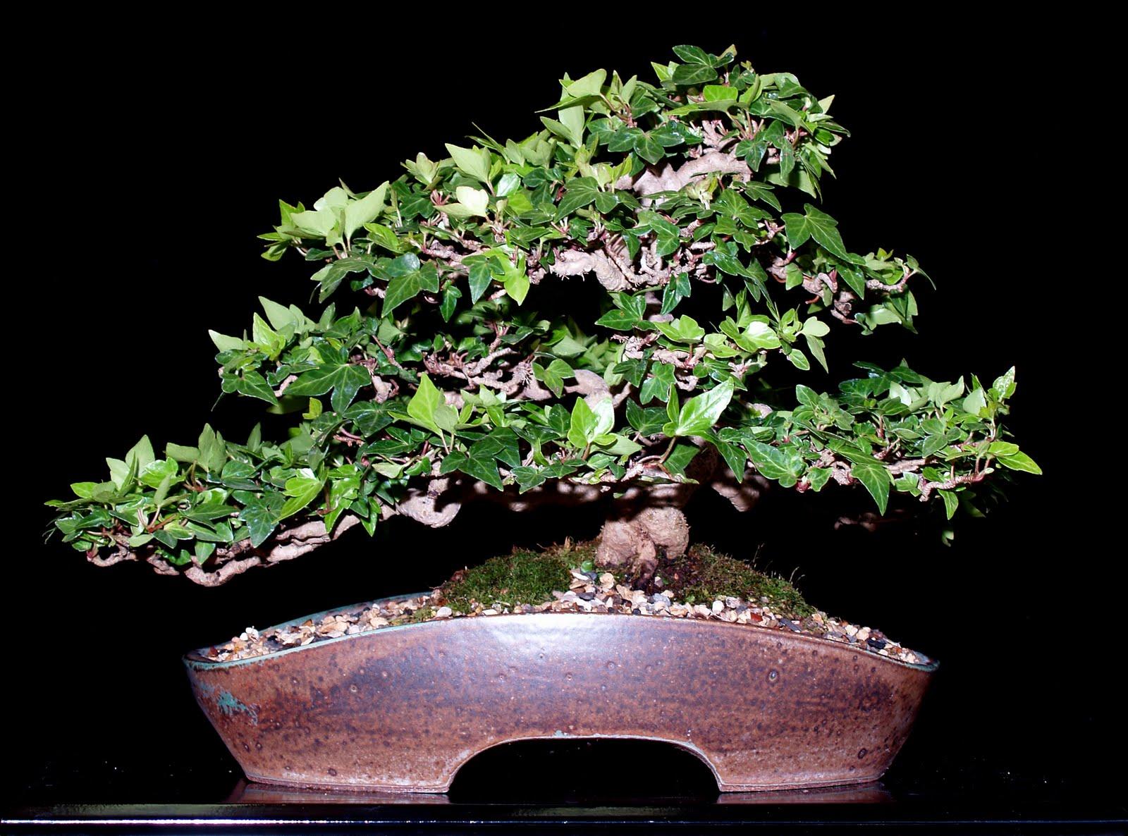 Let39s Learn Japanese The Art Of Bonsai