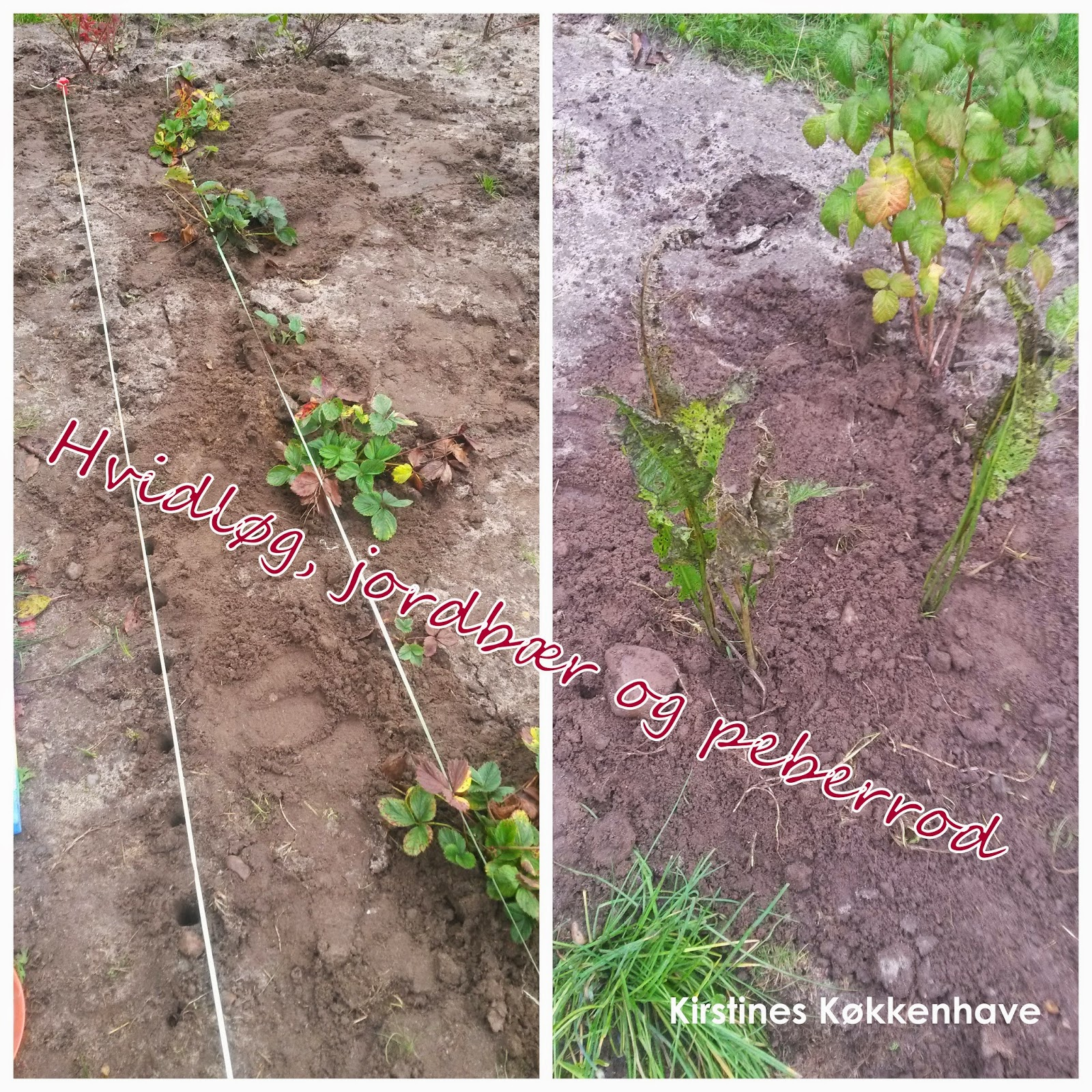 hvidløg, jordbær og peberrod